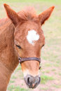 Colt beautiful six week old in the pasture Royalty Free Stock Photos
