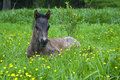 Colt in the meadow on of epuran river jupanesti village mehedinti county romania Royalty Free Stock Photo