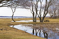 Colt state park vista of trees and water at bristol ri Stock Image