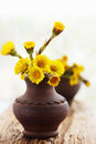 Coltsfoot in ceramic vase flowers ware pottery handmade Royalty Free Stock Photo