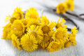 Coltsfoot flowers and scissors old Stock Photo