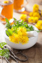 Coltsfoot flowers spring herbs in mortar and herbal tea Royalty Free Stock Photo