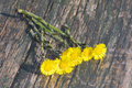 Coltsfoot flowers on a wooden table Royalty Free Stock Images