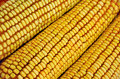 Column of raw corn cob Royalty Free Stock Photos