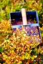 Comb for picking blueberries. Beautiful photos and blur background.