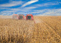 Combine in a field harvest autumn on clear day Royalty Free Stock Images