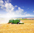 Combine harvester harvesting wheat cereal Royalty Free Stock Photo