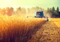 Combine harvester harvesting wheat field Royalty Free Stock Photo