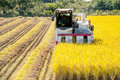 Combine harvester in rice field during harvest time. Royalty Free Stock Photo