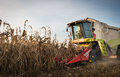 Combine harvesting crop corn grain fields Royalty Free Stock Image