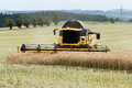 Combine harvesting rape yellow in summer on farmlad rural scene Royalty Free Stock Photo