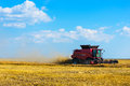 Combine harvesting wheat modern field Royalty Free Stock Photos