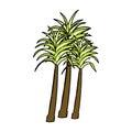 Comic cartoon palm tree retro book style Royalty Free Stock Images
