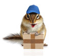 Comical chipmunk courier hold parcel Royalty Free Stock Photo