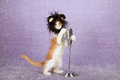 Comical funny kitten wearing black furry animal wig with large ears holding onto vintage fake microphone on stand hat light purple Royalty Free Stock Image