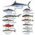 Commercial fish species