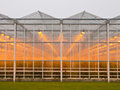 Commercial glasshouse Royalty Free Stock Photo