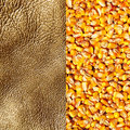 Commodity background, gold corn Stock Photos