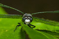 Common darter dragonfly perched on a leaf Royalty Free Stock Photos