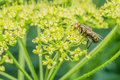 Common fly macro close up photo Stock Images
