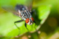 Common housefly fly sitting on the leaf in the grass foliage Stock Images