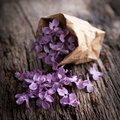 Common lilac flowers on wooden ground Royalty Free Stock Photography