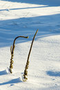 Common Mullein in Snow Stock Photos