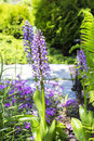 The Common Orchis (Orchis Mili...