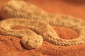 Common sand viper Stock Photo