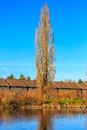 Commonwealth lake park a tall tree stands alone by the in beaverton oregon Royalty Free Stock Photo