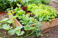 Community garden gardening in urban Royalty Free Stock Photography