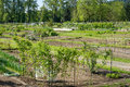 Community garden laid out in plots Royalty Free Stock Photo
