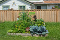 Community gardening raised beds in vegetable garden Stock Image