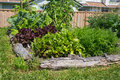 Community gardening raised beds in vegetable garden Royalty Free Stock Photos