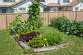 Community gardening raised beds in vegetable garden Royalty Free Stock Photo