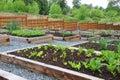 Spoločenstiev zeleninový záhrada