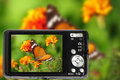 Compact camera capturing beauty nature precisely great color accuracy illustrating nature butterfly photography there copy space Stock Photo