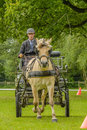 Companion animals horses male carriage driver with a fjorden horse during a agility exercise Stock Photos
