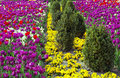 Complementary colors in a park red versus green and violet versus yellow all mixed up garden Stock Images
