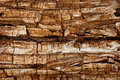 Completely rotted wood Royalty Free Stock Photo