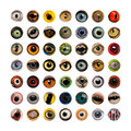 Composition of animal eyes isolated on a white background Stock Image