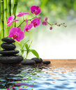 Composition bamboo-purple orchid-black stones Royalty Free Stock Photo