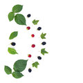 The composition of a berries and leaves. Royalty Free Stock Photo