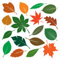 Composition of Color Leafs. Vector Illustration. Royalty Free Stock Photo