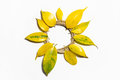 Composition in the form of the sun, circle, flower of yellow aut