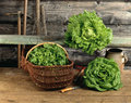 Composition with lettuces Stock Images