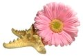 Composition of pink gerbera flowers flower and starfish Royalty Free Stock Photo