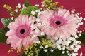 Composition of pink Gerbera flowers Royalty Free Stock Photo