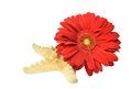 Composition of red gerbera flowers flower and starfish Royalty Free Stock Photo
