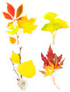 Composition Set of Beautiful Autumn Leaves Royalty Free Stock Photos